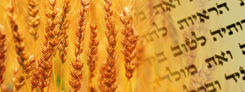 Celebrating the Festival of Harvest with exciting events